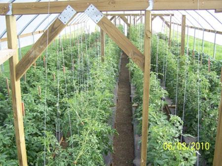 When To Plant Vegetable Garden In Illinois