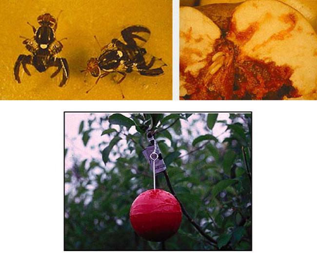 IPM : Illinois Fruit and Vegetable News : Volume 12 : Issue 7